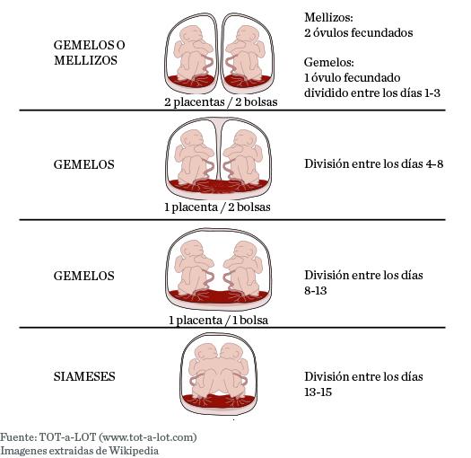 Diferencias entre gemelos y mellizos (placentas y bolsas)